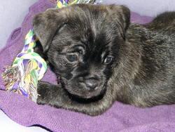 Cleo, chien