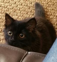 Cleo, chat Gouttière