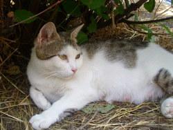 Cléo, chat