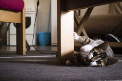 Cléo, chat Gouttière