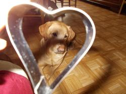 Cléo, chien