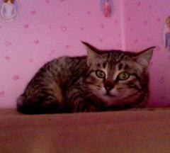 Cléopatre, chat Gouttière