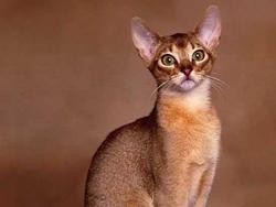 Cléopatre, chat
