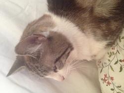 Clio, chat Gouttière