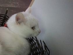 Clochette, chat