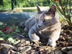 Clodo, chat Gouttière