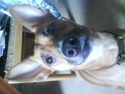 Cloe, chien