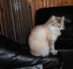 Cloé, chat