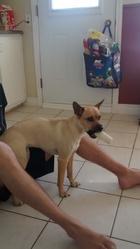 Cloé, chien