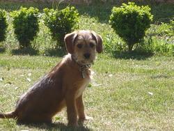 Clyde, chien