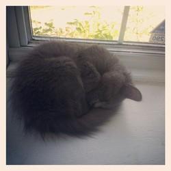 Clyde, chat Gouttière