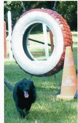 Coca, chien Schipperke