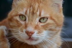 Coca, chat Gouttière