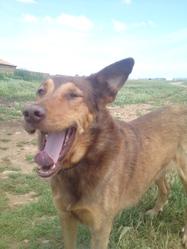 Cochise, chien