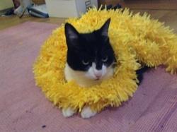 Cochka, chat Gouttière
