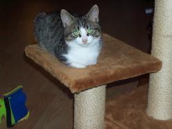 Cochonnet, chat Gouttière