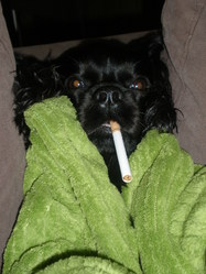 Coco, chien