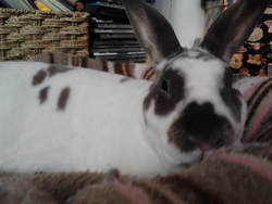 Coco Lapin, rongeur Lapin