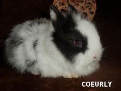 Coeurly, rongeur Lapin
