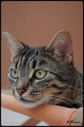 Collby, chat Gouttière