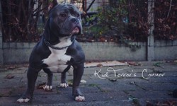 Conor Bully, chien
