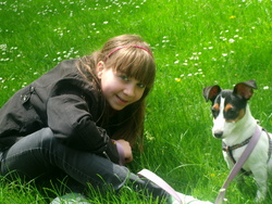 Coockie, chien Jack Russell Terrier