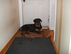 Cookie, chien Rottweiler