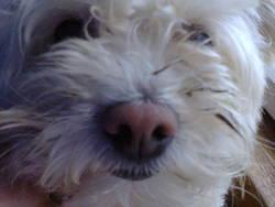 Cookie, chien