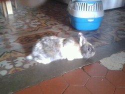Cookie, rongeur