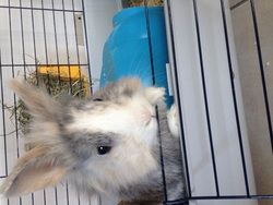 Cookie, rongeur Lapin