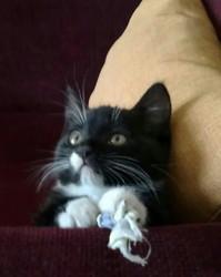 Cookie, chat Gouttière