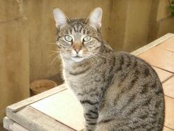 Cooky, chat Gouttière