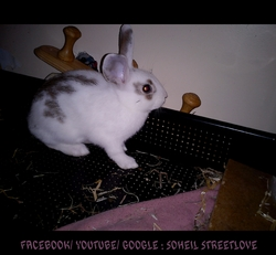 Cooky, rongeur Lapin