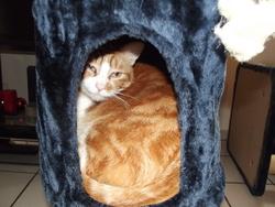 Coolio, chat Gouttière