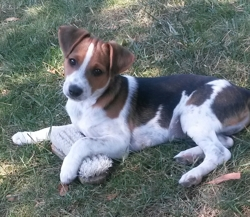 Cooper, chien
