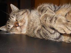Copain, chat Gouttière