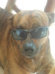 Copain, chien