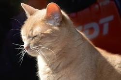 Coquine, chat Gouttière