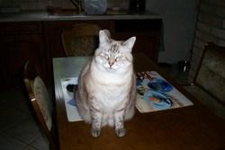 Cosette, chat Gouttière