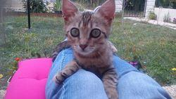 Cosette, chat