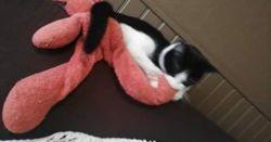 Cosmos, chat Gouttière