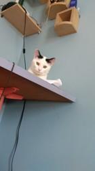 Cottonnelle, chat