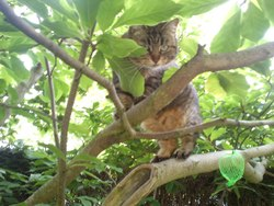 Cracotte, chat