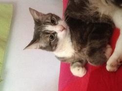 Cracotte, chat Gouttière
