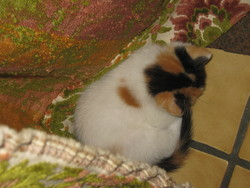 Crapule, chat Gouttière