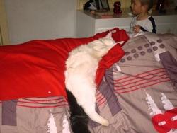 Crassouille Ou Le Blanc, chat