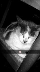 Creepy, chat Gouttière