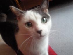 Crevette, chat