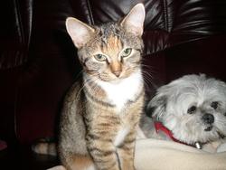 Crevette, chat Gouttière