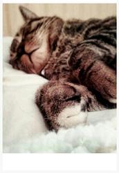 Cripan, chat Gouttière